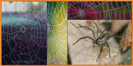 Spiders and Webs Photo Pack