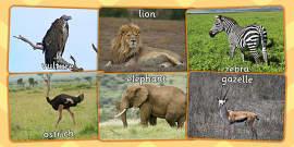 African Animals Display Photos
