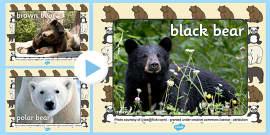 Bears Photo PowerPoint
