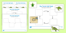 Sea Turtle Life Cycle Activity Sheets (Under the Sea)