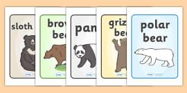 Bears Display Posters
