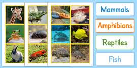 Animal Groups Sorting Cards Photos