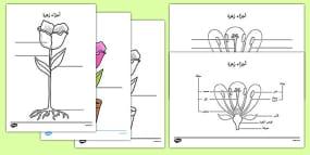 Monohybrid Worksheet Word Parts Of A Plant And Flower Labelling Worksheet Arabic Prepostion Worksheets Word with Relative Adverb Worksheets Pdf Parts Of A Plant And Flower Labelling Activity Sheet Arabic Free Multiplication Color By Number Worksheets Excel