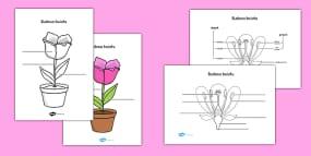 Singulars And Plurals Worksheets Word Parts Of A Plant And Flower Labelling Worksheet Polish Darwin Worksheet with Subtration Worksheets Word Parts Of A Plant And Flower Labelling Activity Sheet Polish Self Esteem Printable Worksheets Pdf