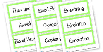 The Lungs Vocab Cards - The Human Body Primary Resources, Body, Our Bodies, Human, Life