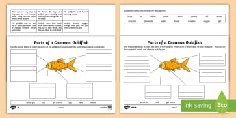 Parts of a Goldfish Differentiated Activity Sheet - worksheet, fish, animal, body, part, structure, feature, describe, label, describe and compare the s