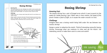 Mantis Shrimp Activity Sheet - ESL Ocean Resources