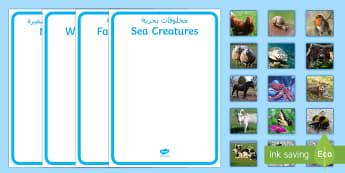 Sea Creatures, Farm Animals, Wild Animals and Minibeasts Sorting Activity Arabic/English - EAL, Arabic, Sea Creatures, Farm Animals, Wild Animals, Minibeasts, Sorting Activity,