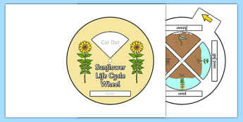 Sunflower Life Cycle Spin Wheel - flowers, plants, life cycles