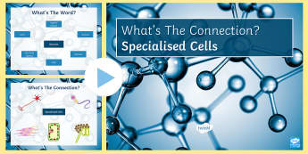 Specialised Cells What's the Connection? PowerPoint - KS4 What's the Connection?, Specialisation, Cells, Sperm Cell, Mitochondria, Muscle Cell, Root Hair