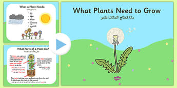 What Plants Need to Grow PowerPoint Arabic Translation - arabic, plants, living things, what plants need to gor ks2, what do plants need to grow, things plants need to grow, growth