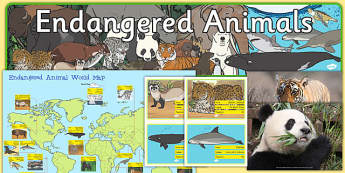 Endangered Animal Display Pack - endangered, animal, display pack, display, pack