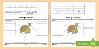 Parts of a Tortoise Differentiated Activity Sheet - worksheet, Tortoise, reptile, animal, body, part, sturcture, feature, describe, label, describe and