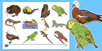 New Zealand Animals Display Cut Outs