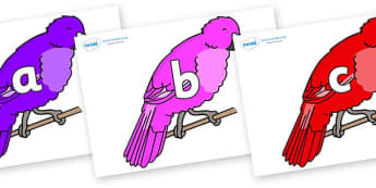 Phase 2 Phonemes on Parakeets - Phonemes, phoneme, Phase 2, Phase two, Foundation, Literacy, Letters and Sounds, DfES, display