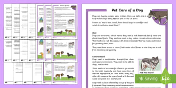 KS2 Pet Care of a Dog Differentiated Reading Comprehension Activity - KS2, comprehension, reading, reading comprehension, reading activity,pet care, pet care of a dog, ow