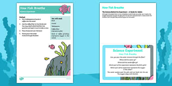 EYFS How Fish Breathe Science Experiment and Prompt Card Pack
