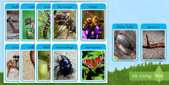 Fotos de exposición: Los bichos - libélula, abeja, caracol, hormiga, típula, escarabajo, mariposa, oruga, gusano, mariquita, cochini