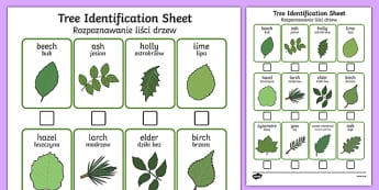 Tree Identification Sheet Polish Translation