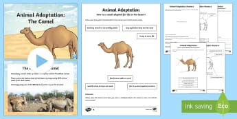Camel Adaptation PowerPoint and Activity Pack - Science, Living World, Adaptation, Camel