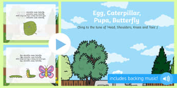 Egg, Caterpillar, Pupa, Butterfly Song PowerPoint - The Crunching Munching Caterpillar, Sheridan Cain, life cycle of a butterfly, Eric Carle, PowerPoint
