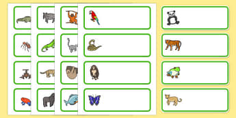 Editable Drawer - Peg - Name Labels (Jungle & Rainforest) - Jungle, Rainforest, Classroom Label Templates, Resource Labels, Name Labels, Editable Labels, Drawer Labels, Coat Peg Labels, Peg Label, KS1 Labels, Foundation Labels, Foundation Stage Label