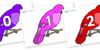 Numbers 0-31 on Parakeets - 0-31, foundation stage numeracy, Number recognition, Number flashcards, counting, number frieze, Display numbers, number posters