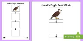 Haast's Eagle Food Chain Activity - New Zealand, native birds, Haast's eagle, food chain,