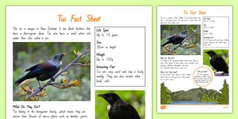 NZ Birds Tui Fact Sheet - nz, new zealand, Native, birds, animals