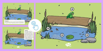 Life Cycle of a Frog Picture Hotspots - EYFS, Early Years, KS1, Life Cycle of a Frog, frog, tadpole, frogspawn, froglet, pond, life cycle, Twinkl Go, twinkl go, TwinklGo, twinklgo