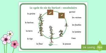 Set de mots : Faire pousser des haricots - printemps, plante, fleur, végétaux, le vivant, cycle de vie, reproduction, cycle 3, cycle 1, cycle