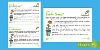 How Do Seeds Grow? Explanation Writing Sample - Literacy, How Do Seeds Grow? Explanation  Writing Sample, literacy, explanations, writing, text type