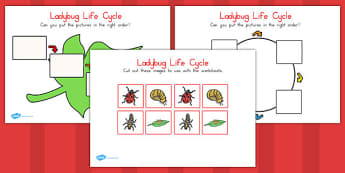 Ladybug Life Cycle Worksheets - ladybug, life cycle, worksheet