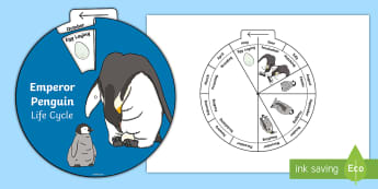 Emperor Penguin Life Cycle Wheel Split Pin Activity - Emperor Penguin Life Cycle Wheel Split Pin Activity