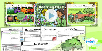 PlanIt - Science Year 2 - Plants Lesson 1: Observing Plants Lesson Pack