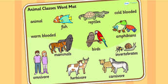 Animal Classes Word Mat - animals, animal classes, word mats