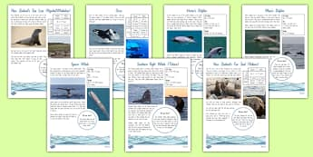 New Zealand Native Marine Mammals Fact File - nz, New Zealand, animals, native, whales, dolphins, seals, factfiles