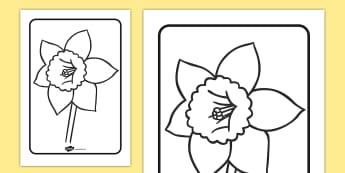 Daffodil Colouring Sheet - daffodil, colouring, sheet, colour