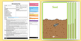 Life Cycle of a Sunflower Sequencing EYFS Adult Input Plan and Resource Pack - EYFS, Early Years planning, adult led, Maths, number recognition, Understanding the World, plants and growth