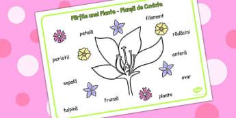 Părțile unei plante - Planșă de cuvinte