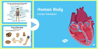 Human Body Information PowerPoint English/Portuguese - Ourselves, skeleton, organs, brain, lungs, heart, breathing, internal organs, pp, ppt, eal