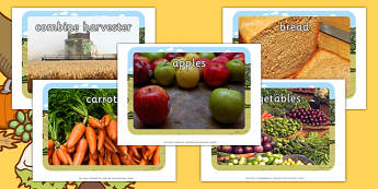 Harvest Topic Display Photos - Display Posters, A4, display, posters, harvest,  harvest festival, fruit, apple, pear, orange, wheat, bread, grain, leaves, conker