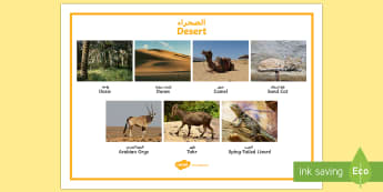 Desert Word Mat Arabic/English - UAE, ADEC, MOE, animals, emirates, information, non fiction, science ,Arabic-translation