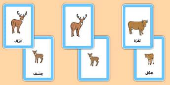 بطاقات مطابقة الحيوانات وصغارها - الحيوانات، صغار الحيوانات، عربي