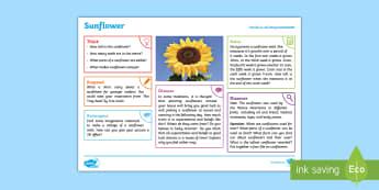 Summer: Sunflower KS2 Exploration Sheet - summer, sunflower, sun, plants, seasons, KS2, Imagine (KS2)