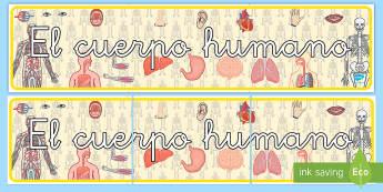 Pancarta: El cuerpo humano - pancarta, cartel, mural, exposición, exponer, decoración, decorar, el cuerpo humano, cuerpo, cuerp
