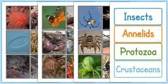 Invertebrate Sorting Cards - invertebrate, sorting, cards, sort