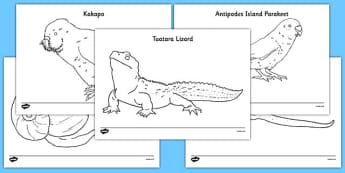 New Zealand Animals Colouring Pages