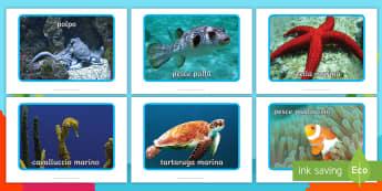 Le creature del mare Foto Poster - le, creature, del, mare, sotto, il, in, fondo, al, mar, delfino, granchio, foto, poster, italiano, i