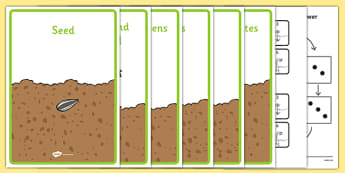 Life Cycle of a Sunflower Sequencing Activity Pack - EYFS, Early Years, plants and growth, Understanding the World